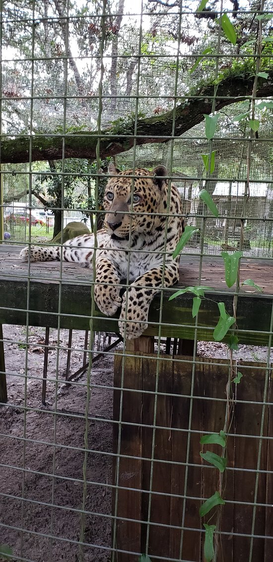 Wildlife Survival Sanctuary (Spring Hill) - 2019 All You