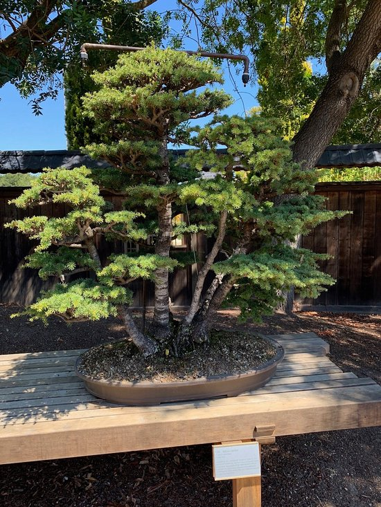 Gsbf Bonsai Garden At Lake Merritt Oakland 2021 All You Need To Know Before You Go With Photos Tripadvisor