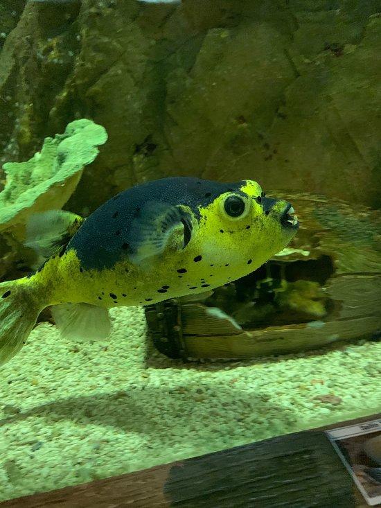 Blue Coral Aquarium (Kuala Lumpur) - 2019 All You Need to