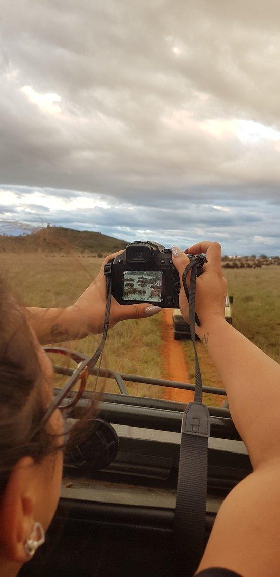 foto di mandria di bufali