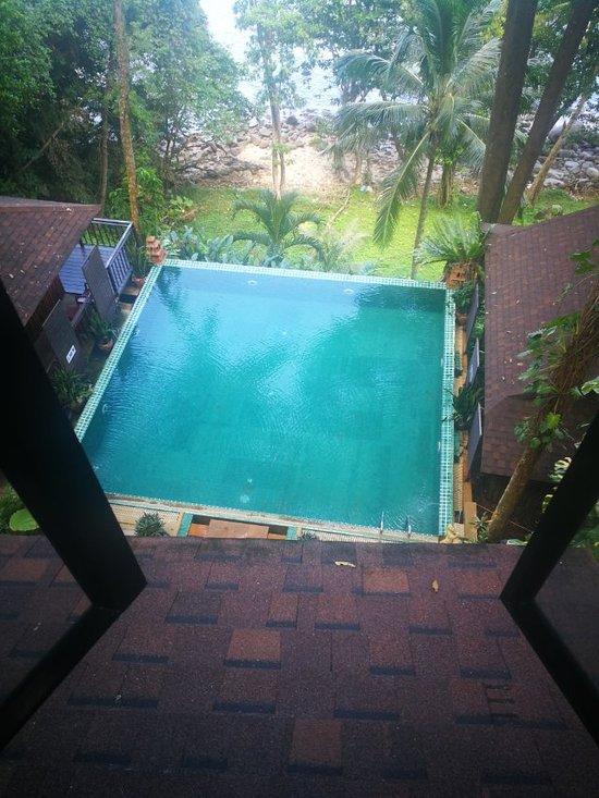 Für Garten,Balkon /& zu Hause SabaI-minor-Palme bis 30°