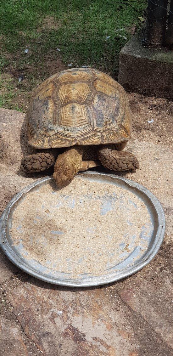 65 year old tortoise