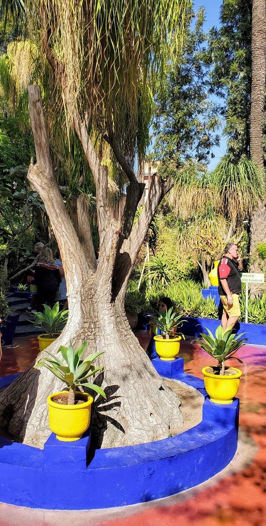 More garden...more blue