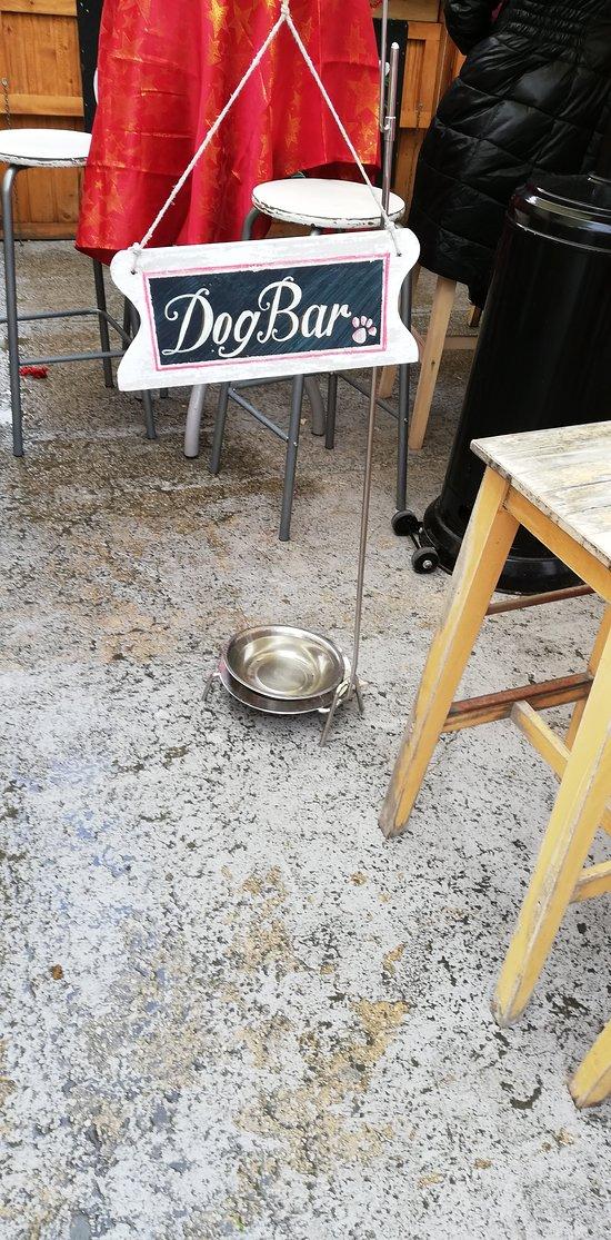 bar dog...