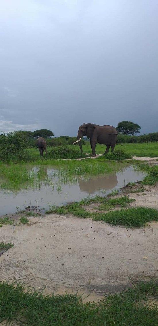 Beautiful tarangire with Elephants