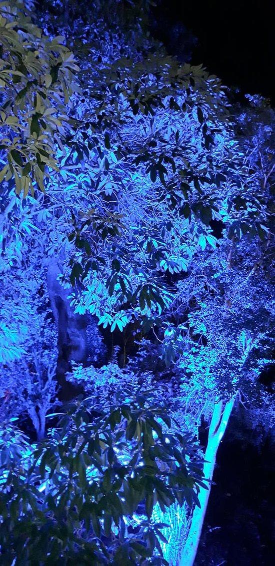 floodlit tree