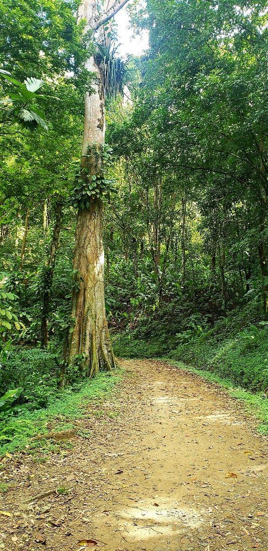 Condensed 8hr Island Tour of Tobago