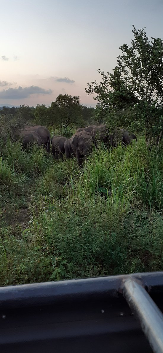 "Wild Elephant ""Safari experience"""