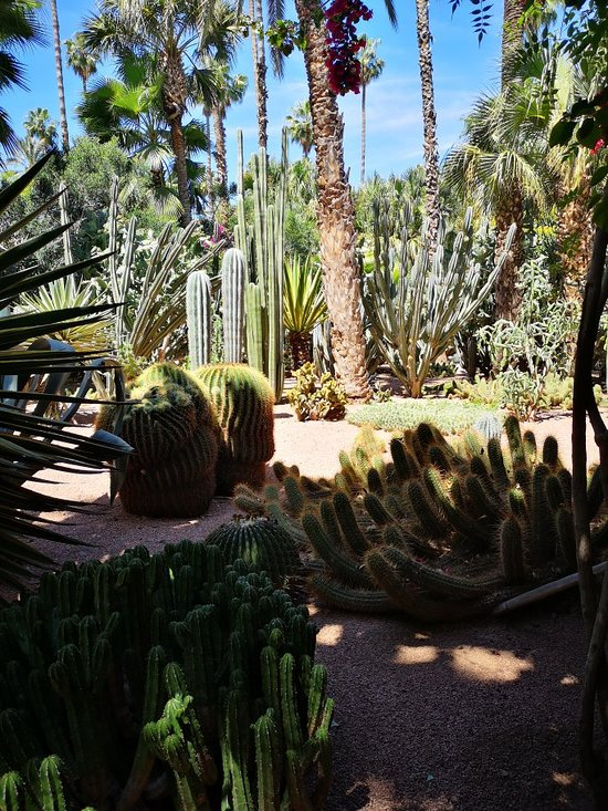 Jardin Majorelle Marrakech 2020 All You Need To Know Before
