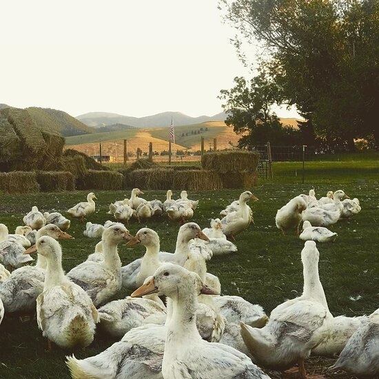 Oddfellow Inn And Farm 96 1 3 5 Prices B B Reviews Helena Mt Tripadvisor