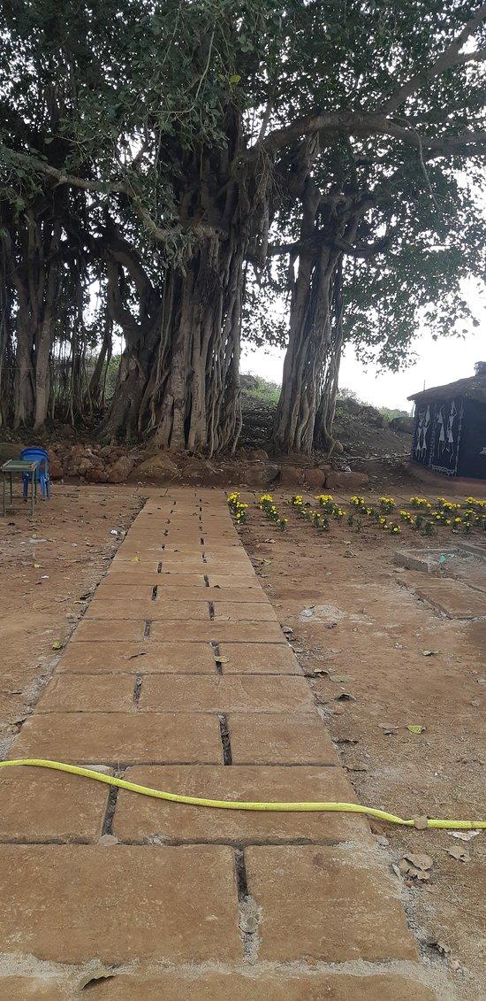 he Aadivasi village: # 1-44, Ramalam Street, Chinthapalli Mandalam, near by kasthuriba school, Tajangi, Andhra Pradesh 531116 86399 03979  lambasingiresorts9@gmail.com  86399 03979