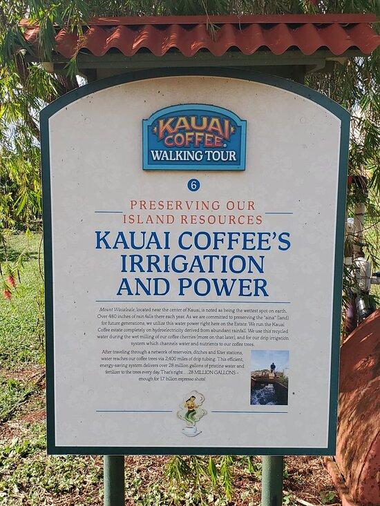 Kauai Coffee Company Kalaheo 2021 All You Need To Know Before You Go Tours Tickets With Photos Tripadvisor