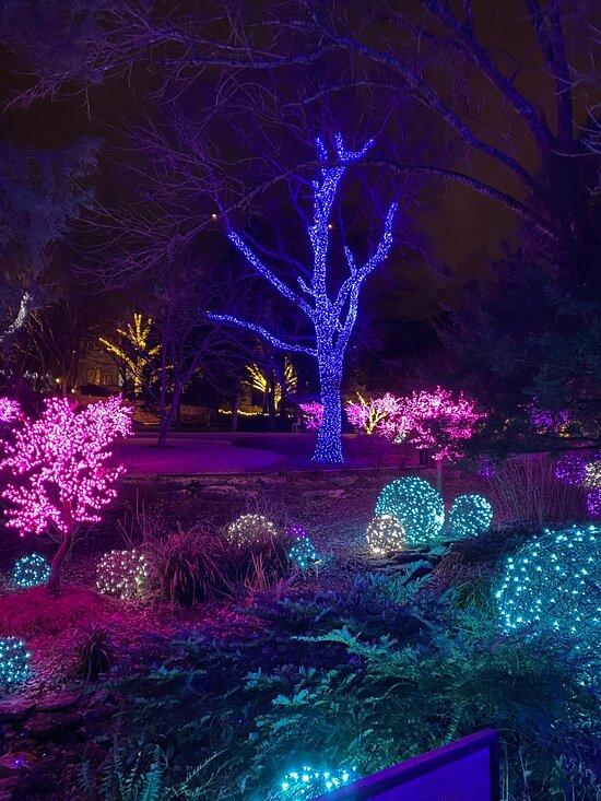 christmas lights at cheekwood - Cheekwood Gardens Holiday Lights & Dinner November 29