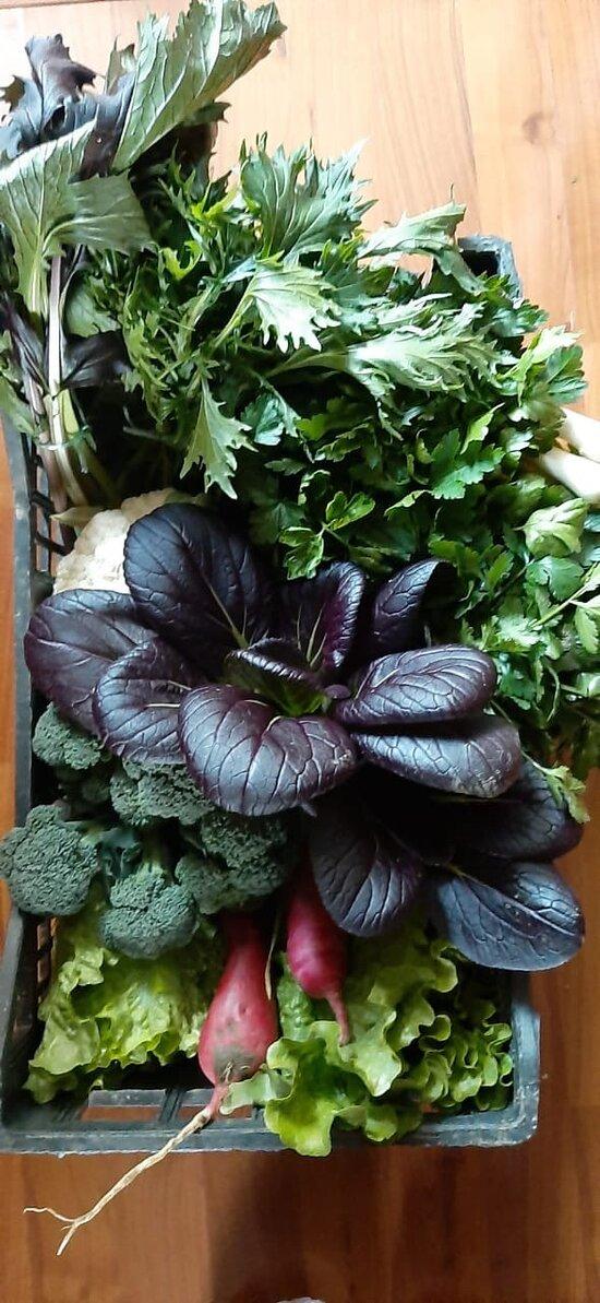 Fustanella Farm - Seed to Table Organic Farm and Restaurant