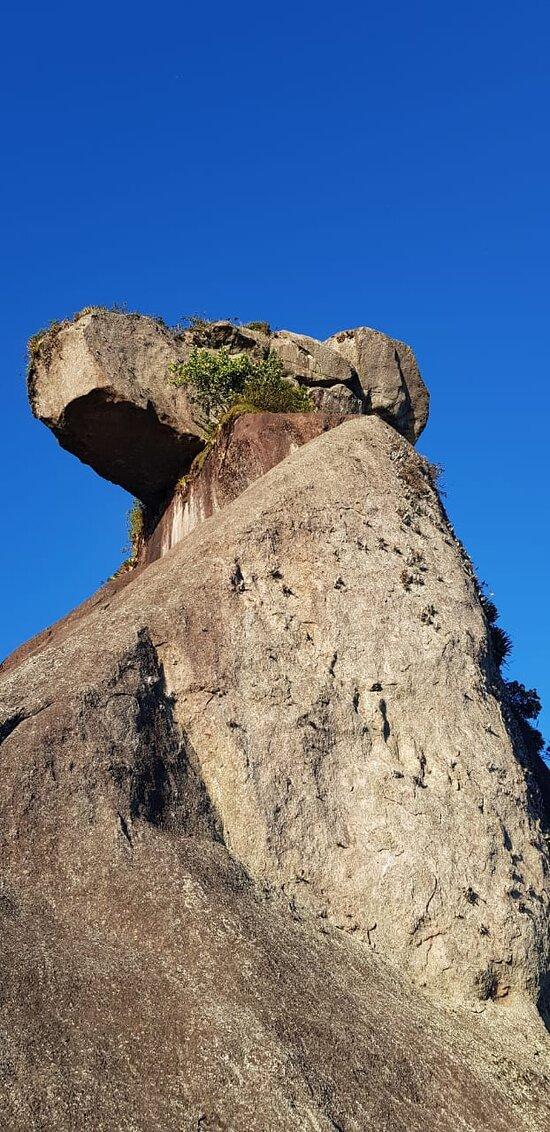 Parte inferior do pico do papagaio