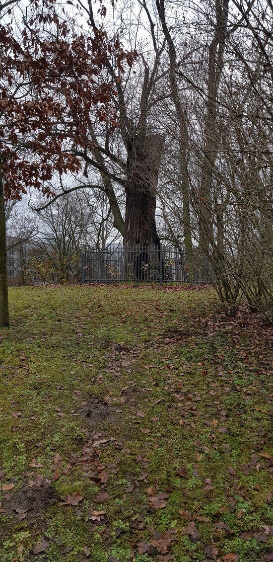 Deutschland, Frankfurt (Oder).Lennépark. Winter-2020/2021