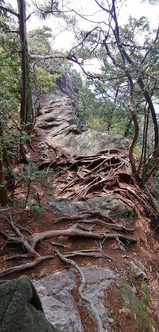 東海自然歩道は尾根伝いの岩場や木の根っこばかり