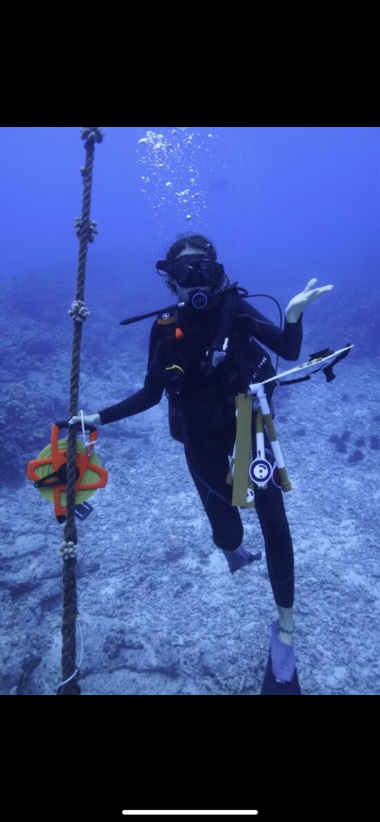 Surveying reef health - substrate, invertebrate and fish surveys
