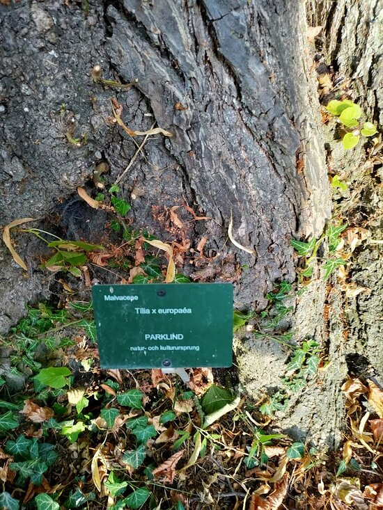 DBW's Botanical Garden