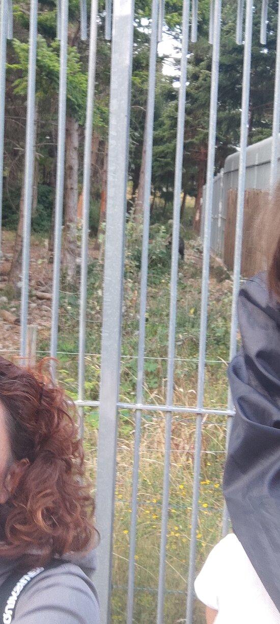 Visita all'area faunistica dell'orso bruno a Palena