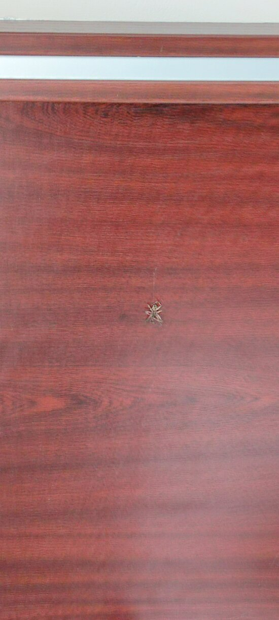 пауки в номере 203