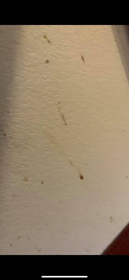 The rest of the blackish/brown staining/substance found underneath of the desk.
