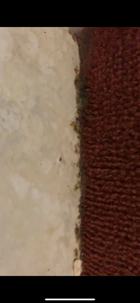 more reddish/brown substance, dirt, hair, and starting of red mold along the wall and carpet by the hot tub.