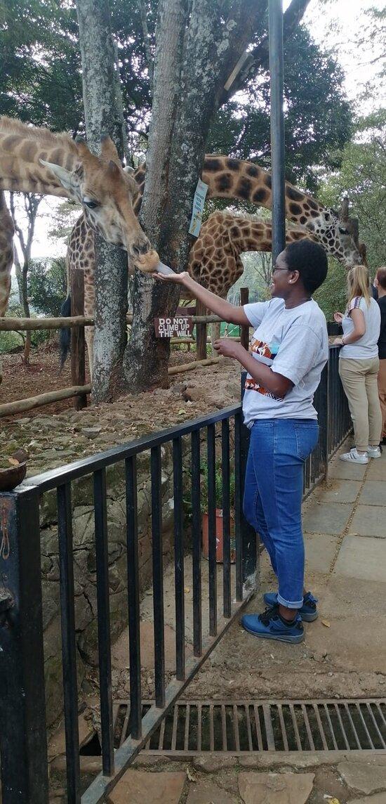 Giraffe Centre Day Tours
