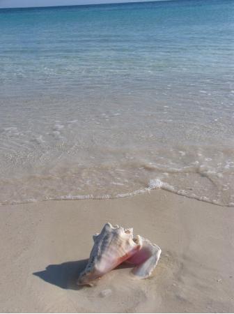 Bishop's Bonefish Resort Foto