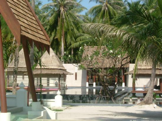 SALA Samui Resort And Spa : around the pool area