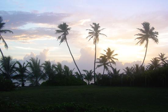 Pelican Cove Condos: Pelican Cove - Patio View at Sunrise