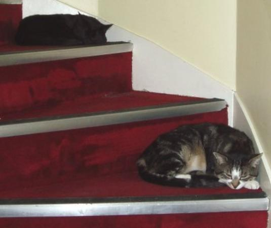 Hotel Monte Carlo: Cats on the stairs.