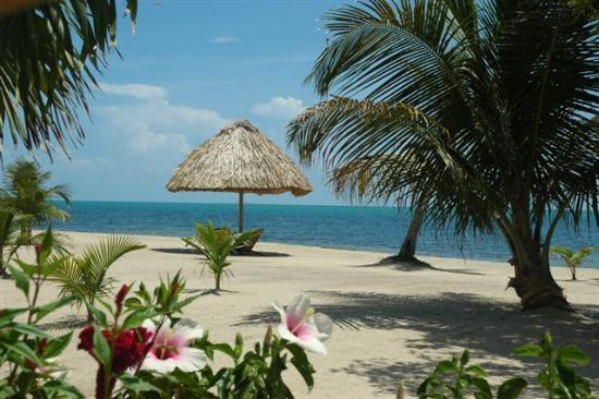 The Placencia Hotel and Residences : Zeboz Beach, gorgeous!