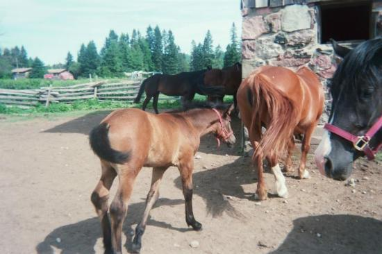 Cedar Rail Ranch Resort