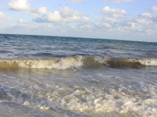 Excellence Riviera Cancun: The BIGGEST decision for you to make- can you live with a beach with seaweed and unclear water?