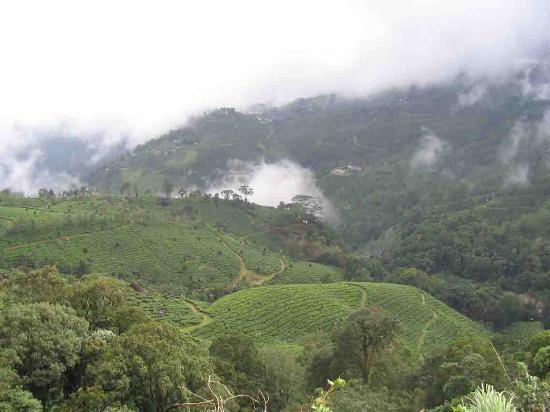Munnar Inn: Beautiful Tea Gardens