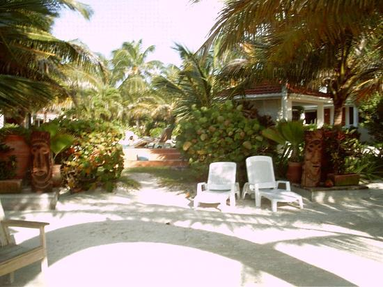 Belize Tradewinds Paradise Villas: A shot of the ppol