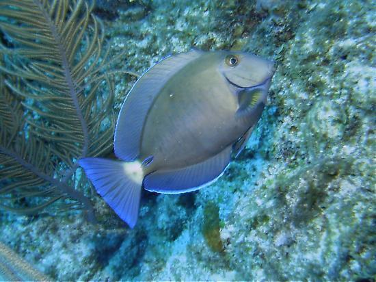 ترايد ويندز بارادايس فيلاز: The diving here is incredible