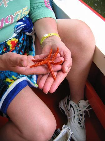 Playa el Agua, Venezuela: Starfish at Restinga