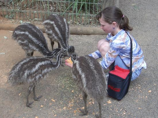 Featherdale Wildlife Park: Emus