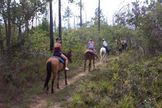Blancaneaux Lodge : Riding Horses