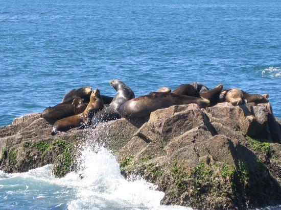 Hotel Playa Mazatlan : Saw sea lions during our trip to Stone Island