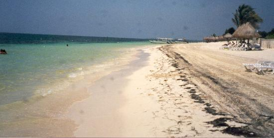 Club Paraiso Maya: Beach after seagrass cleanup.