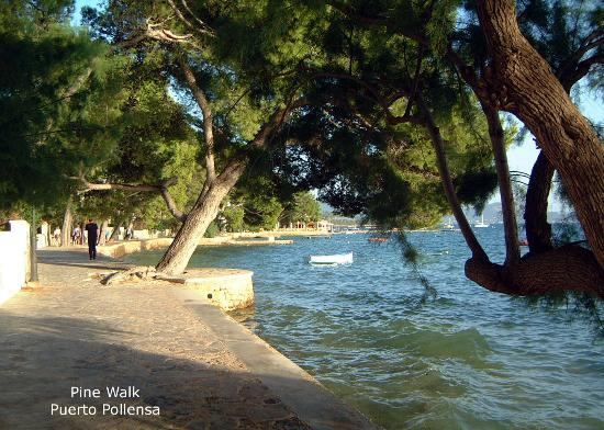 Hotel Illa d´Or: The Pine Walk between the hotel and the town