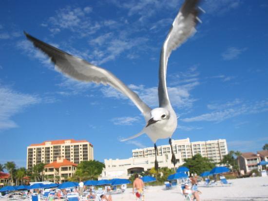 Club Regency of Marco Island: Beach Companion