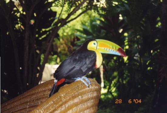 Sofitel Legend Santa Clara: Tucan living there