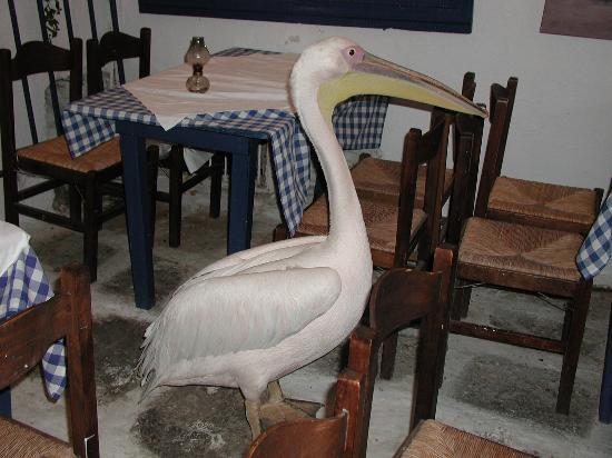 "Villa Konstantin: Greetings in town by the local ""Pelican"""