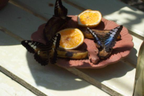 Oranjestad, Aruba: Butterfly Farm