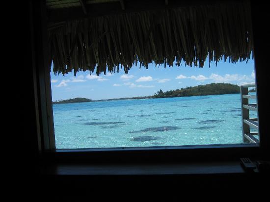 InterContinental Bora Bora Le Moana Resort: Horizon view bungalow