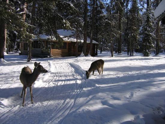 The Lodges On Seeley Lake Photo